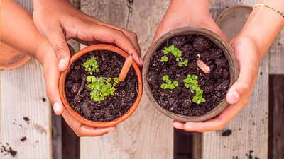 Avis et prix crayons à planter SPROUT WORLD