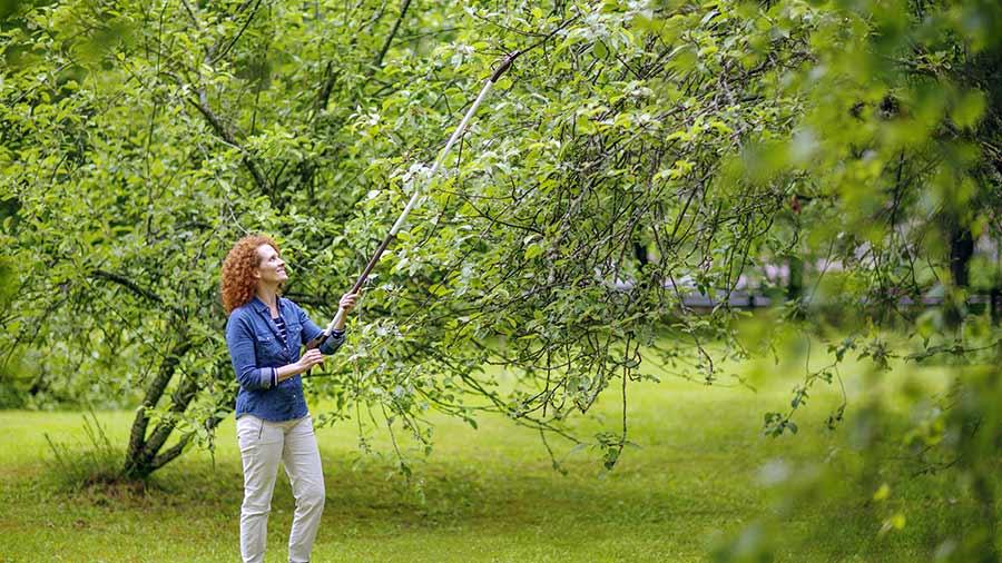 Fiskars am liore ses coupe branches pour le taillage en hauteur zone outillage - Cisaille pour couper branches ...